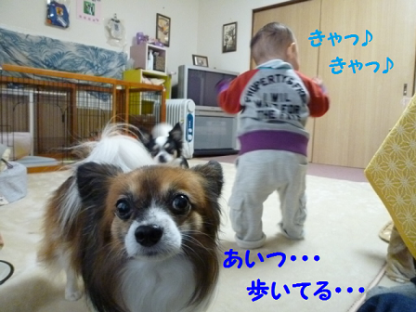 20101122-1.png