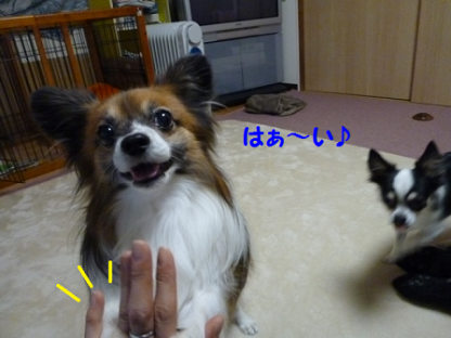 20101122-8.png