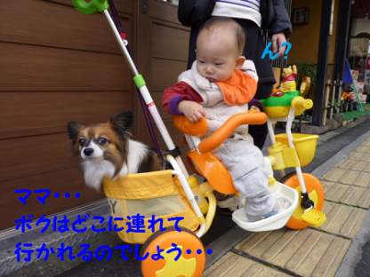 20101123-10.png