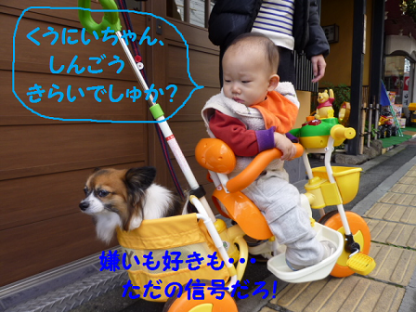 20101123-12.png