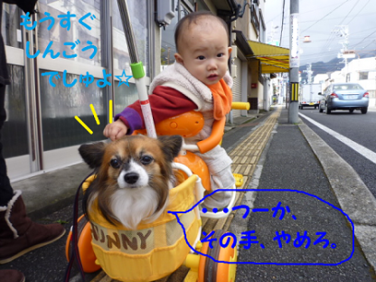 20101123-16.png