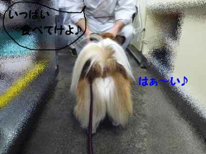20101123-5.png
