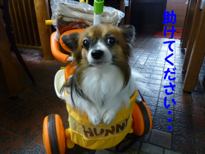 20101123-7.png