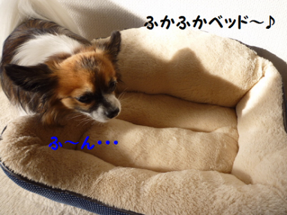 20101218-6.png