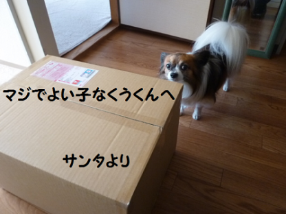 20101218-7.png
