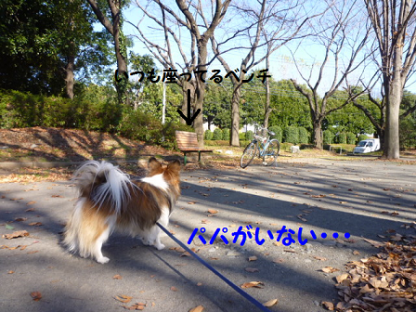 20101221-6.png