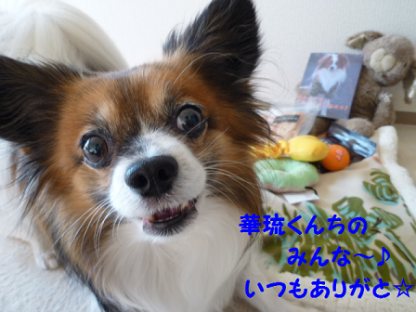 20101226-6.png