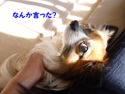 20101228-3.png