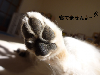 20101228-6.png