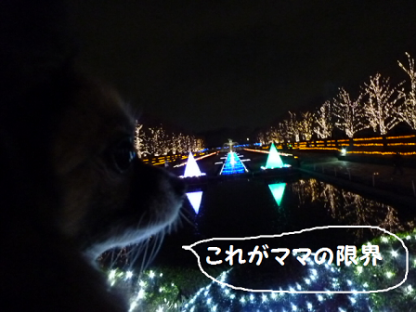 2010126-3.png