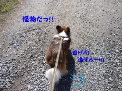 2010327-9.jpg