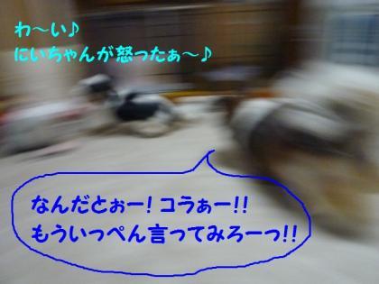 2010420-12.jpg
