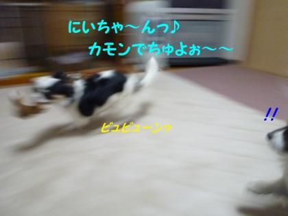 2010420-13.jpg