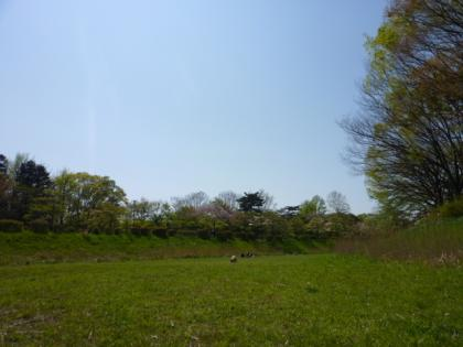2010425-1.jpg