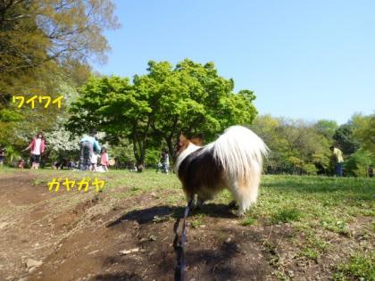2010425-7.jpg