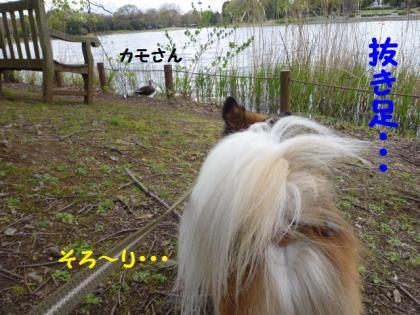 2010426-1.jpg