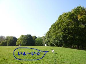 2010430-4.jpg