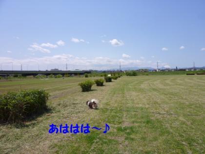 2010513-6.jpg