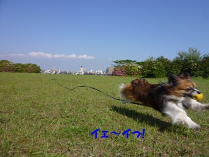 2010517-10.jpg