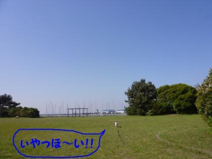 2010517-9.jpg