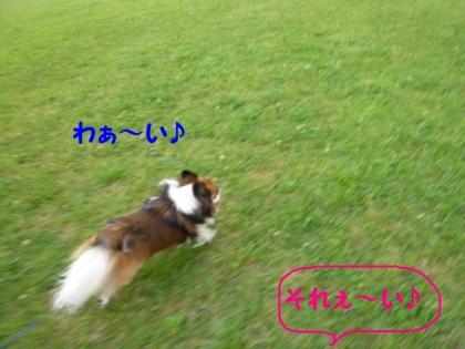 2010526-3.jpg