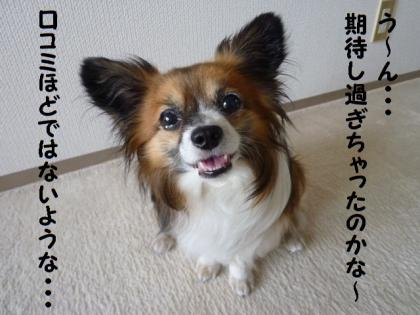 2010610-11.jpg