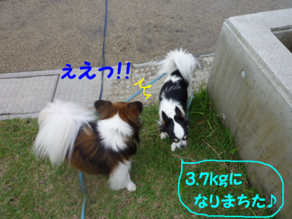 2010627-6.png