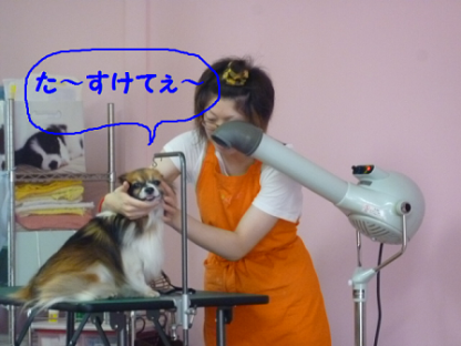 2010630-15.png