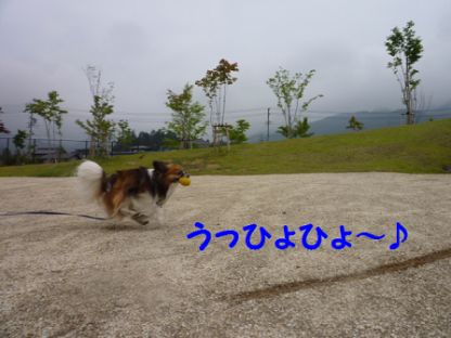 2010630-4.png