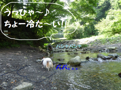 2010816-22.png