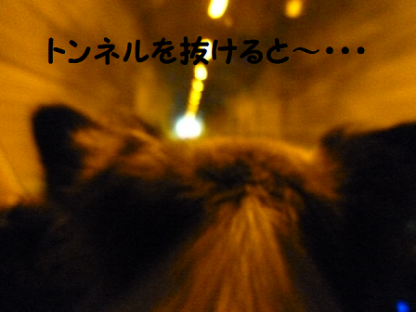 2010816-3.png