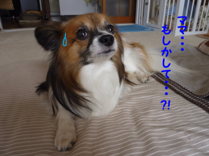2010929-3.png