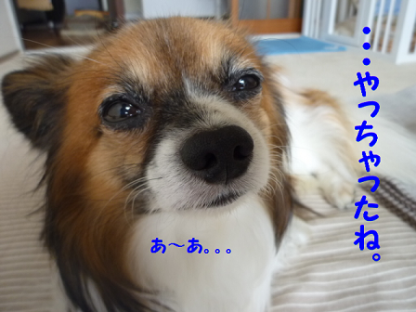 2010929-6.png