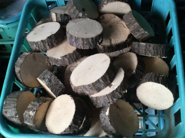 薄切り産卵木