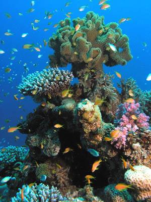 Canyon Coral Garden