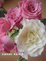 バラ。ピンク