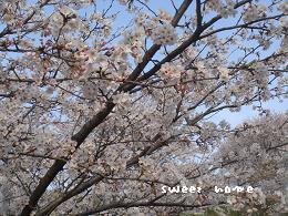 竜王山桜UP
