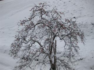 200912182_snow