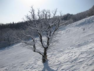 201001052_snow