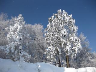 201001053_snow