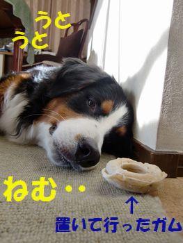 お散歩行ったら眠いの・・・。