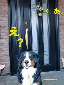玄関でメリクリ~♪