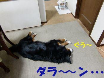 僕、寝ていま~す・・・。