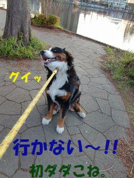 そっち行かないの~!ヤなの~!!