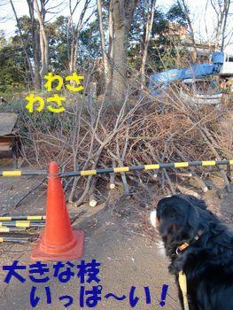 大きな枝がこんなにいっぱい~!!