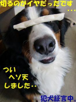 僕、犯犬・・・?