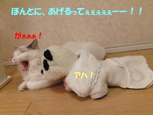13-31_20091218023758.jpg