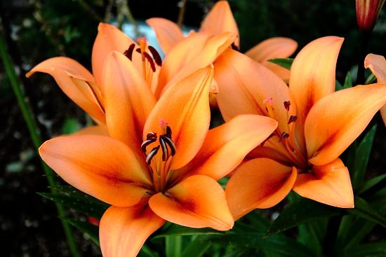 花の美術 a