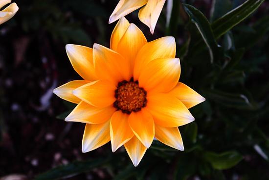 花の美術 b
