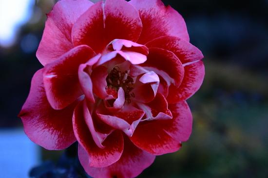 花の美術 c